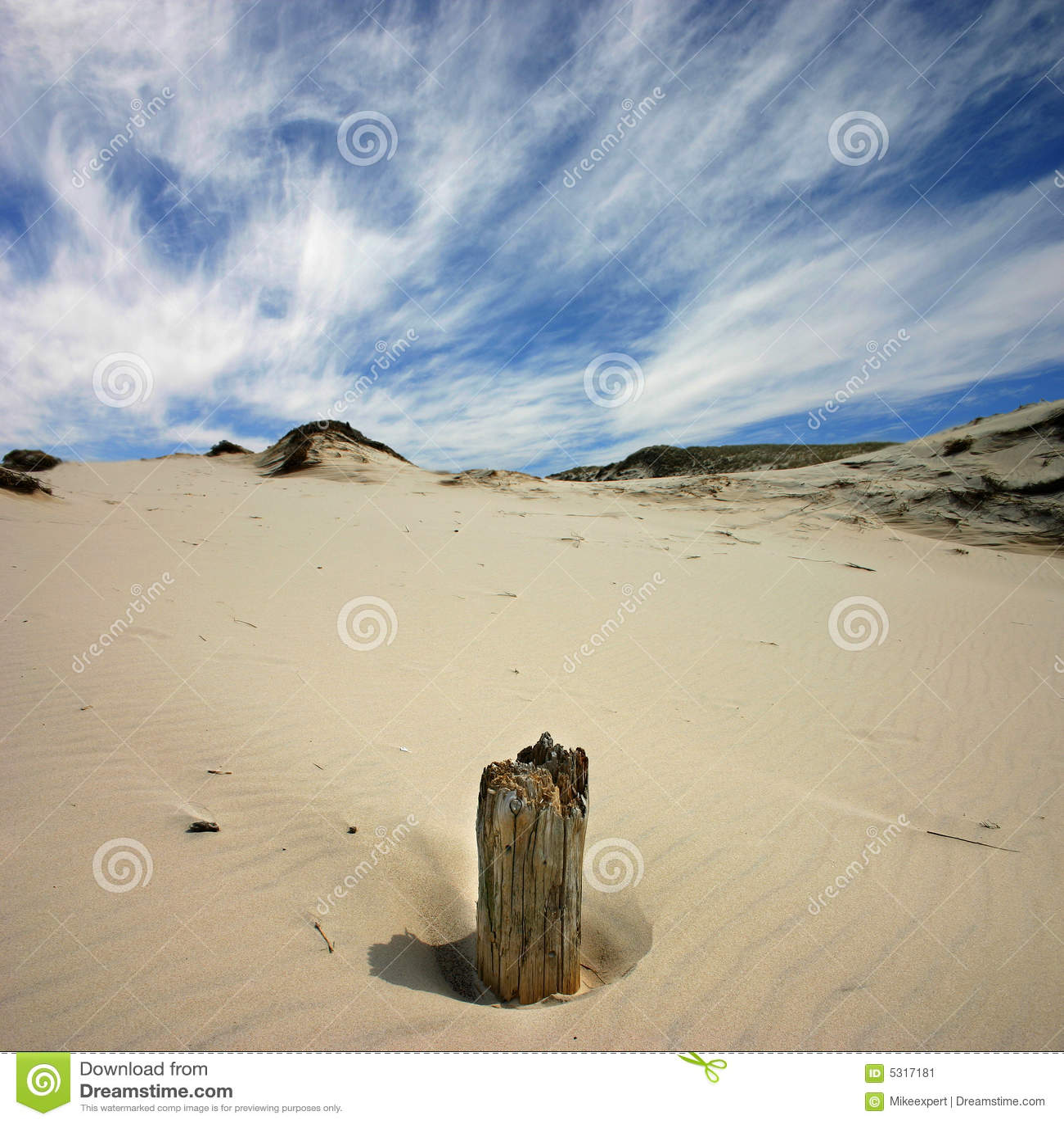 Download Radice immagine stock. Immagine di crepe, vecchio, albero - 5317181