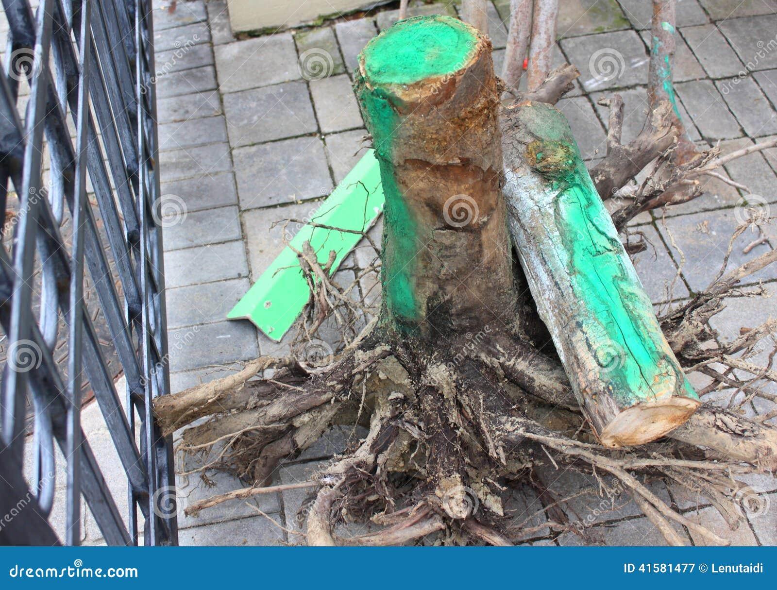 Radice dell albero