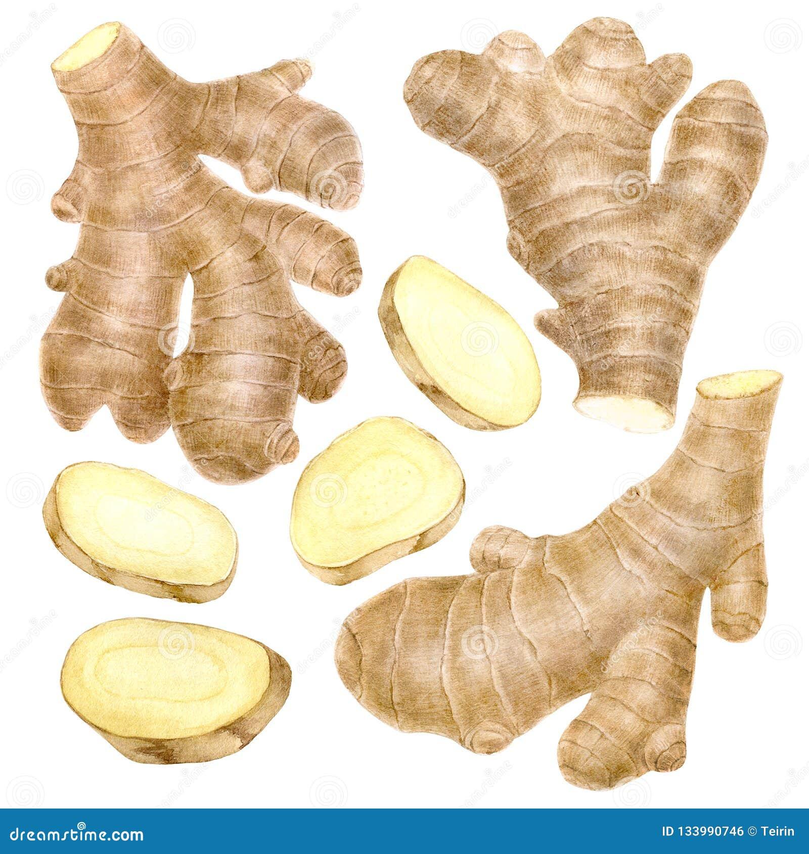 Radice dello zenzero su fondo bianco, materia prima per la cottura e cuocere Spezia affettata ed intera della radice Ingrediente