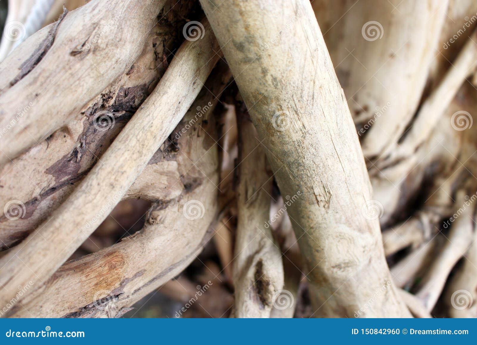 Radici del modello delle radici aggrovigliate dell albero