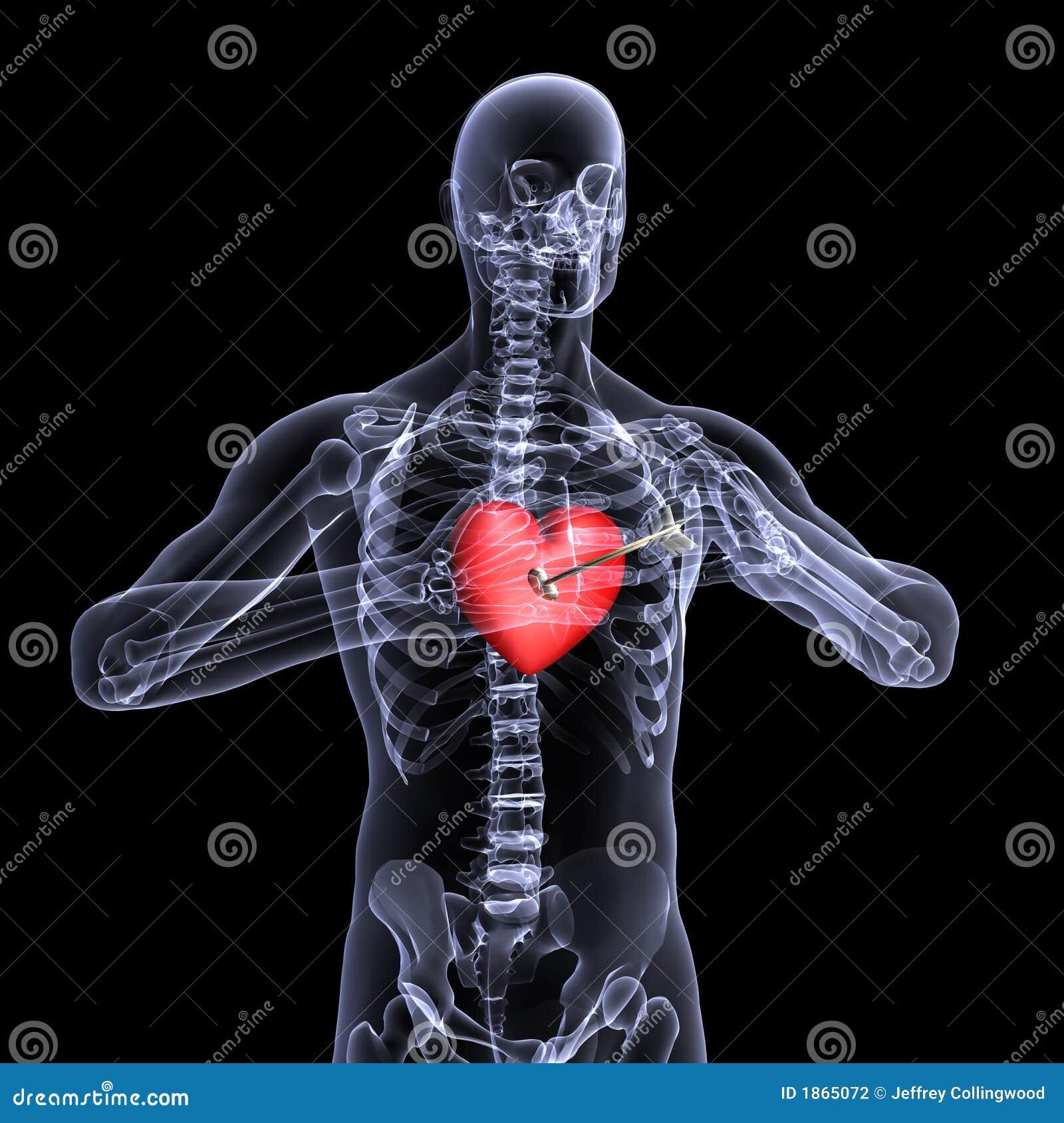 Radiografía Esquelética Del Corazón 3. De La Tarjeta Del Día De San ...