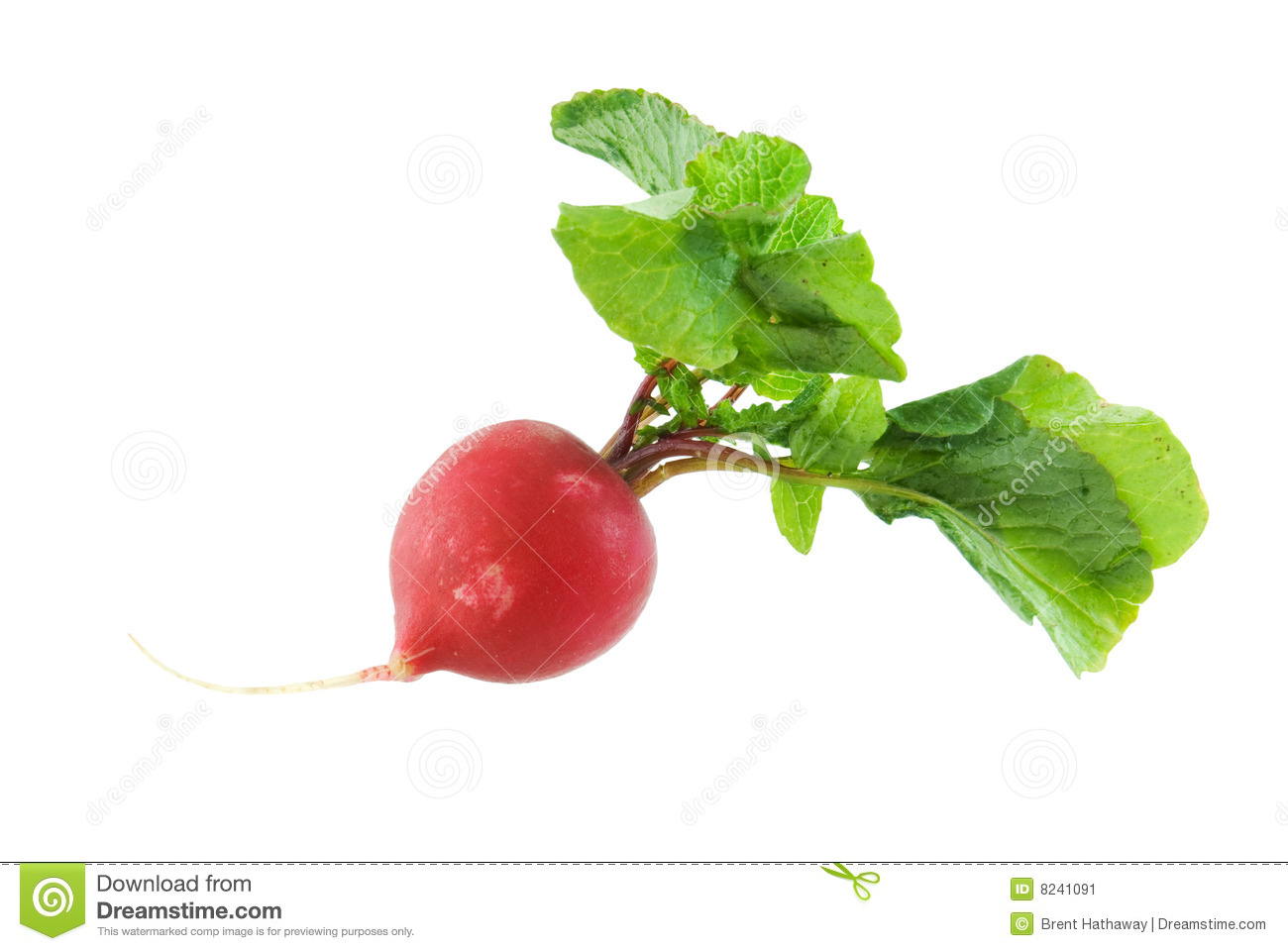 Radish isolated on a white background.