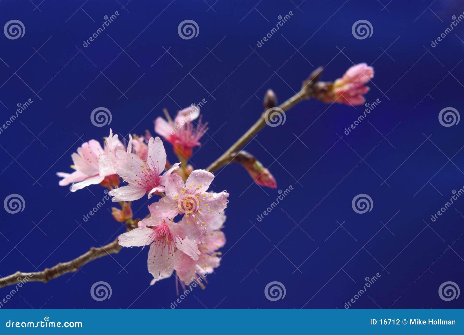 Radosny kwiat