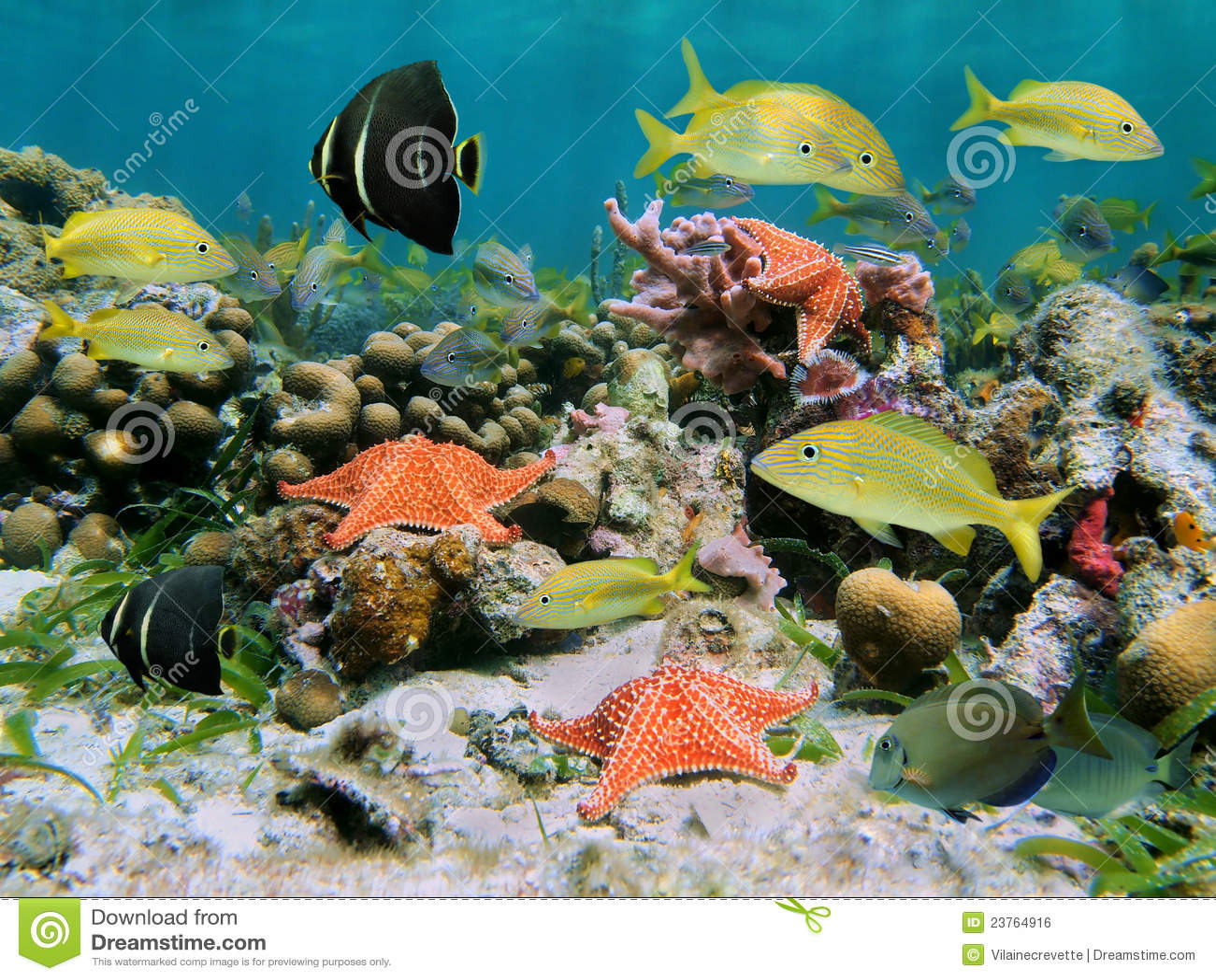 Rafa koralowa sealife