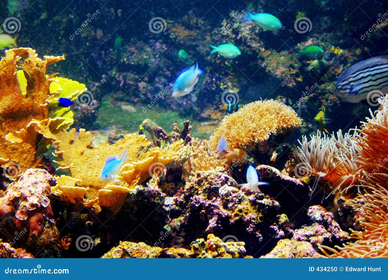 Rafy koralowe