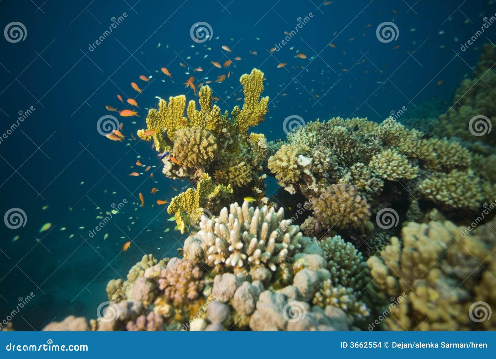 Rafy koralowe scena podwodna