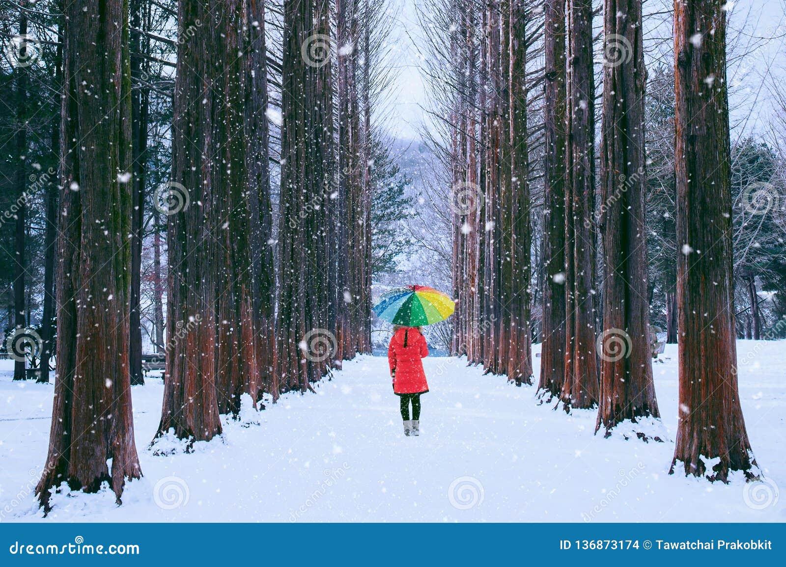 Ragazza con l ombrello colourful nell albero di fila, isola di Nami in Corea del Sud Inverno in Corea del Sud