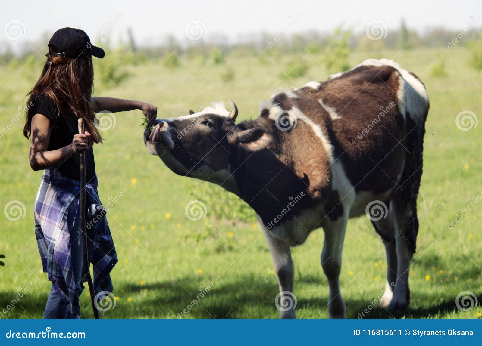 Ragazza d alimentazione della mucca felice
