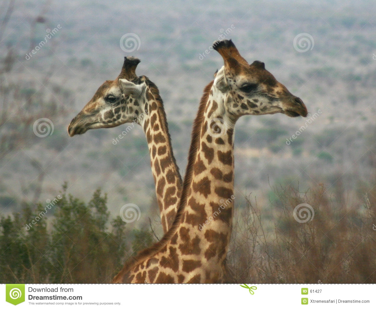 Ragazzi 2.04 della giraffa