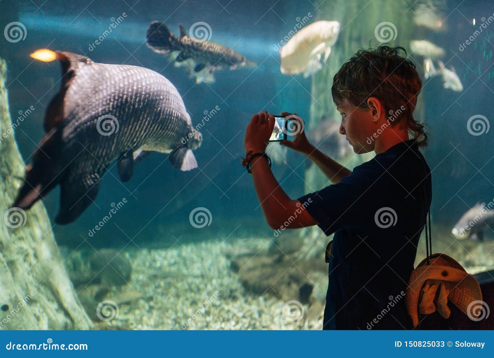 Ragazzo che per mezzo di un telefono che prende una foto dell arapaima gigas o del pirarucu che vive nel Rio delle Amazzoni nell