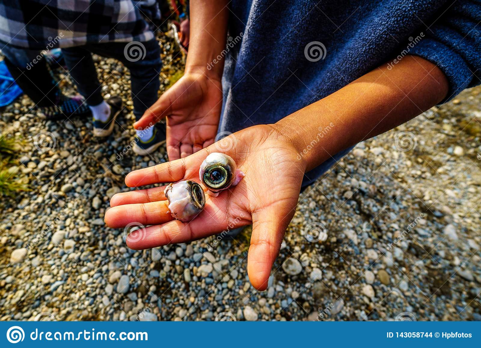 Ragazzo che tiene gli occhi di un salmone morto nei luoghi in cui i pesci depongono le uova in Stave River