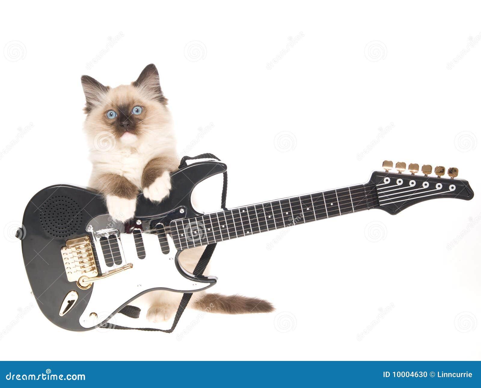 Ragdoll kitten with mini electric guitar