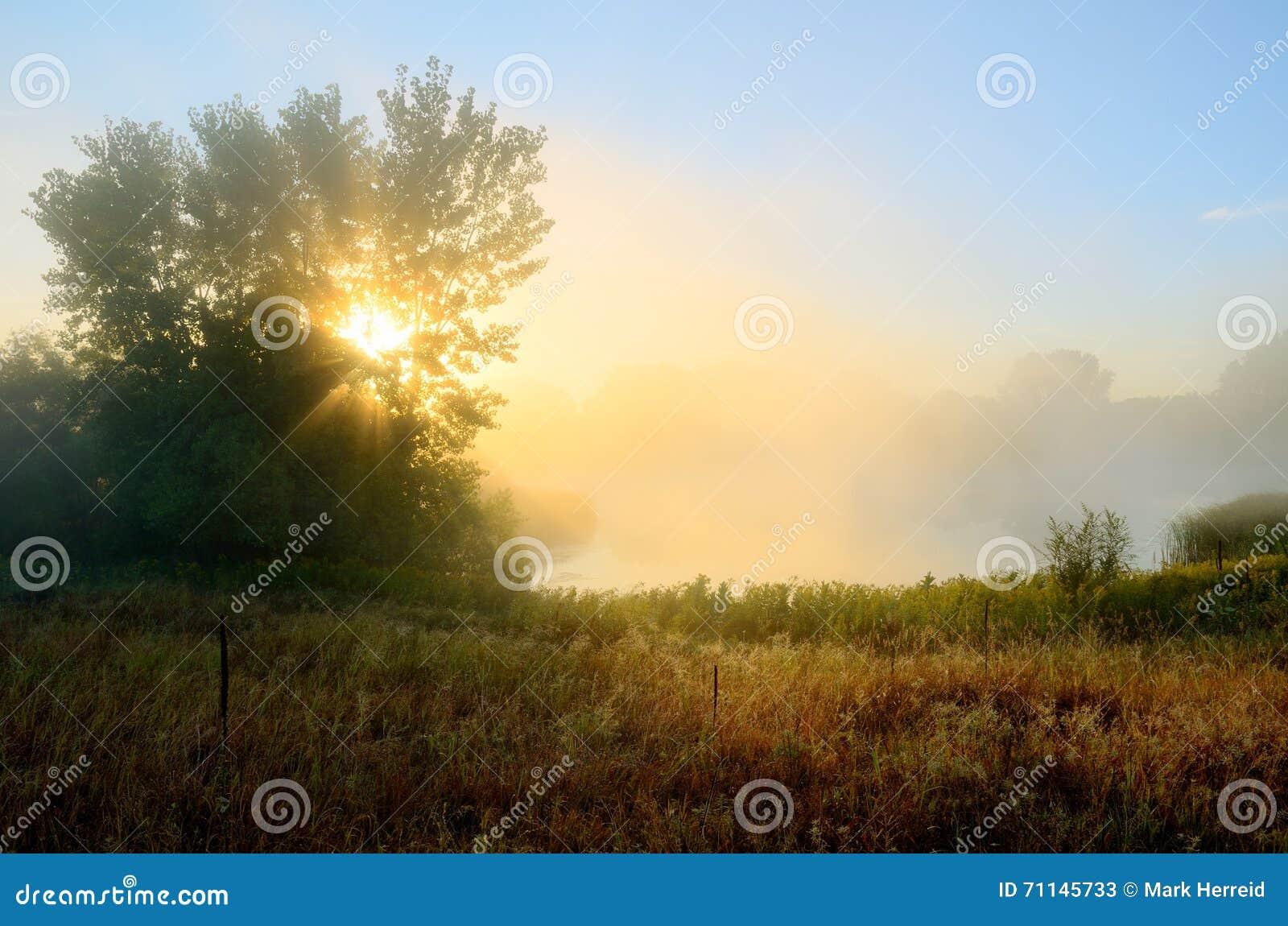 Raggi di Sun attraverso la nebbia di mattina
