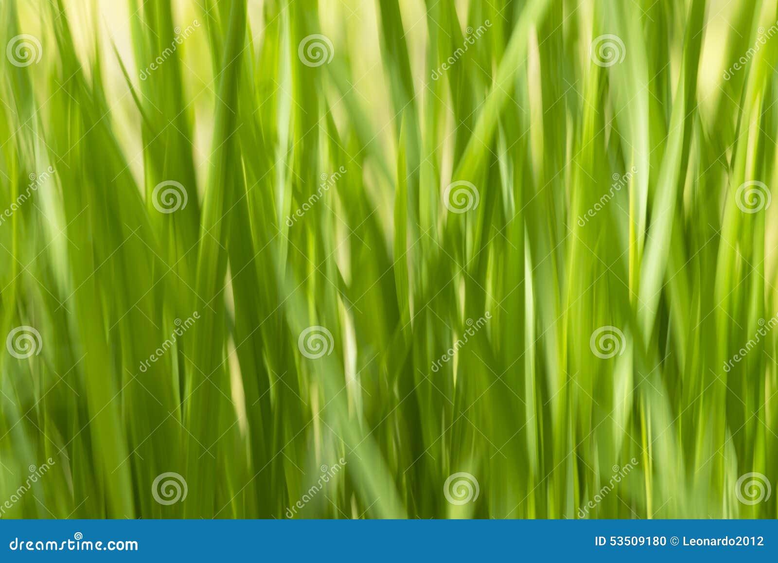 Raggiro ecologycal e sano del fondo di verde dell estratto dell erba delle sfuocature