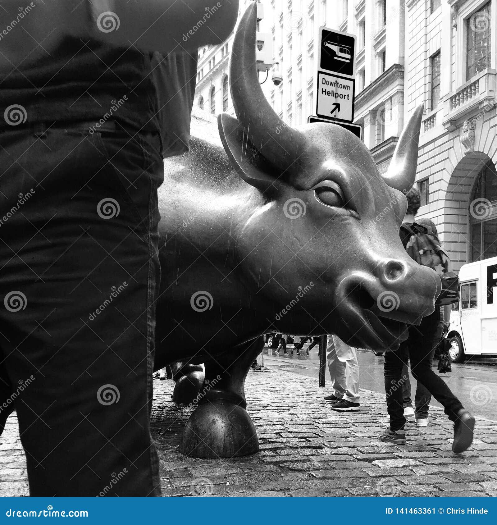 Raging bull New York