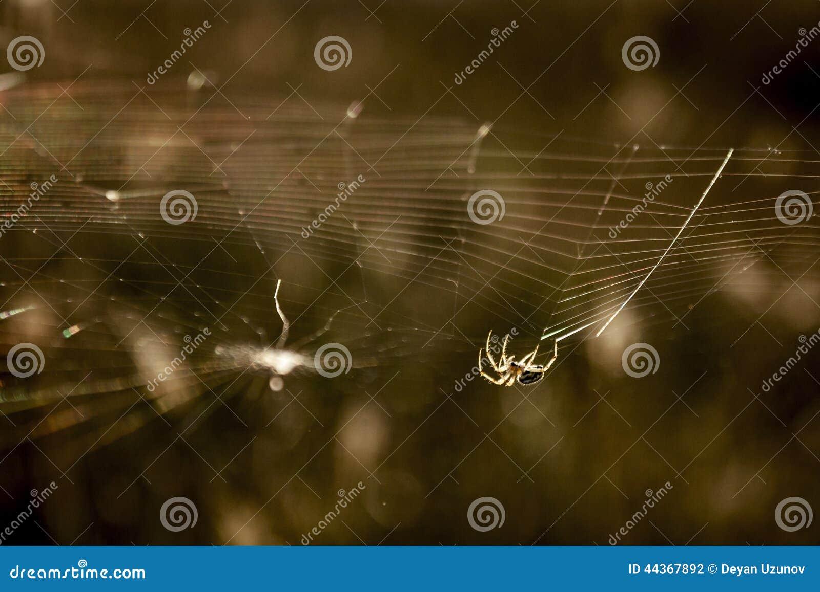 Ragno che lavora al web