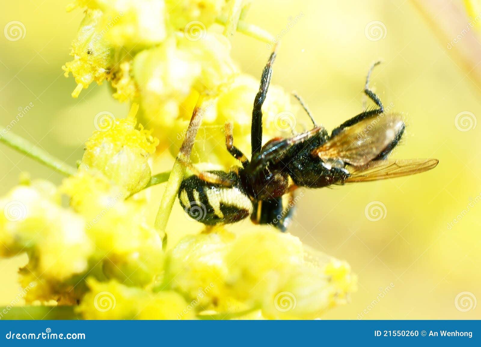 Ragno e mosca