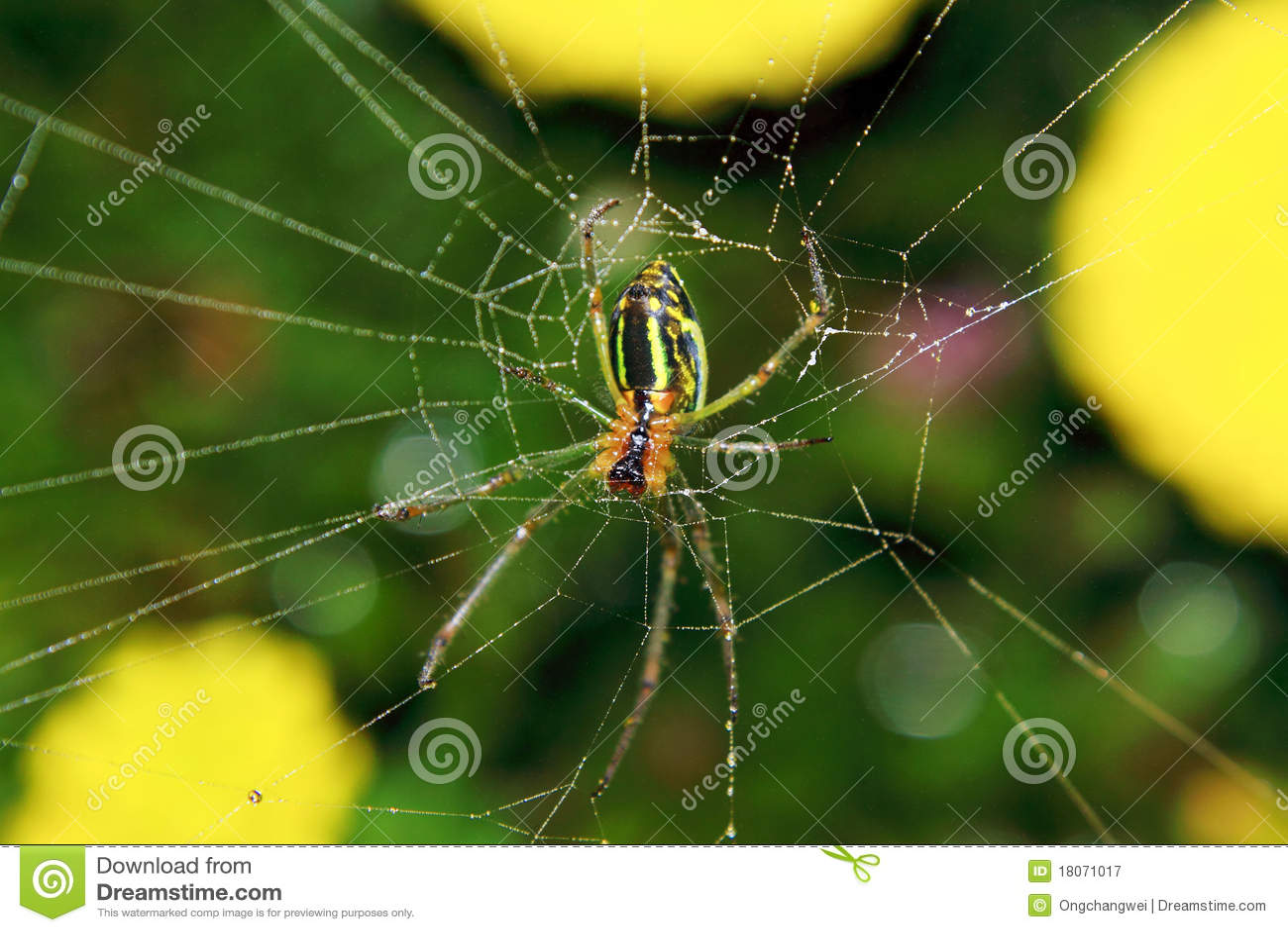 Ragno ed il Web nella natura