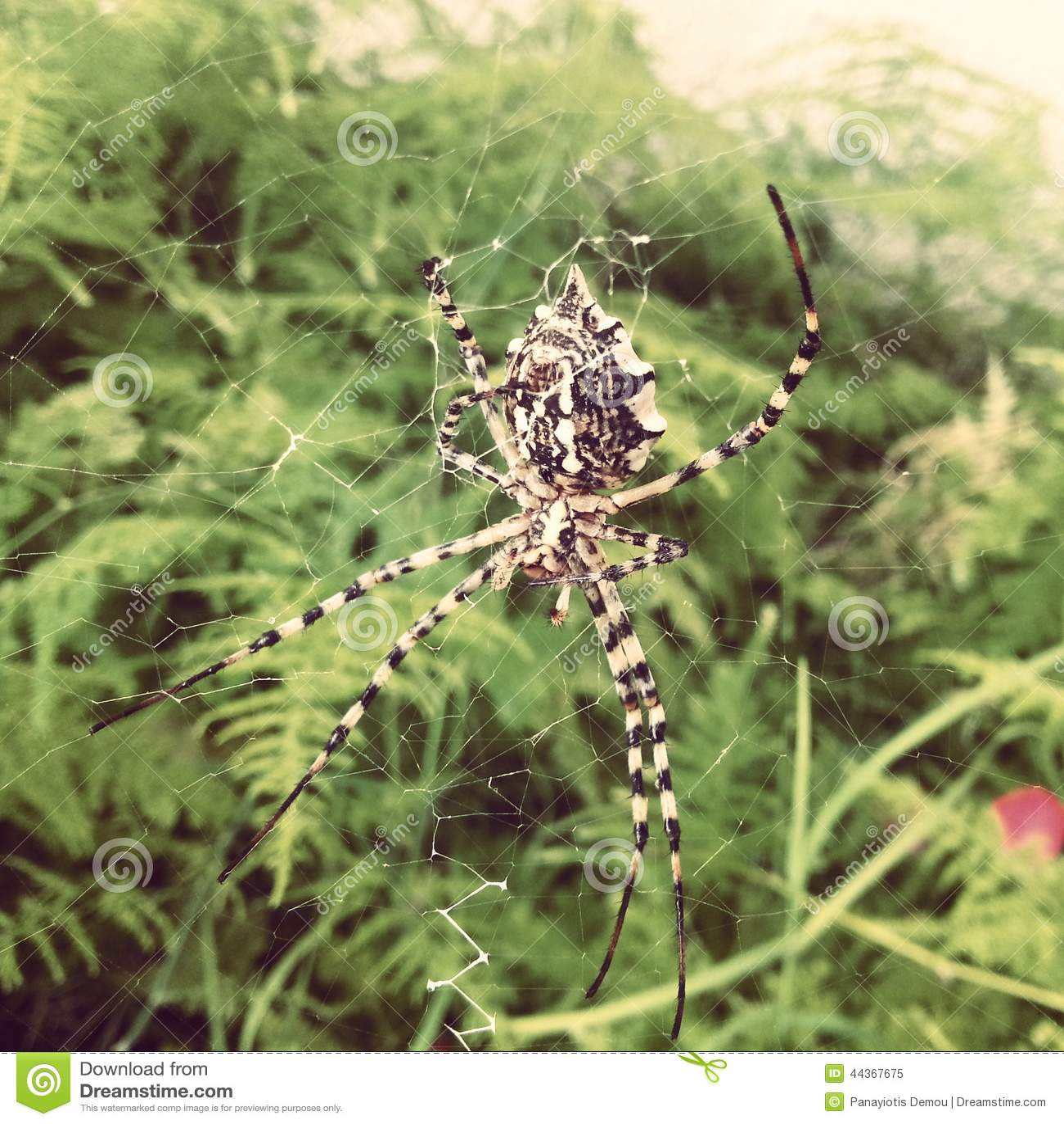 Ragno nel giardino