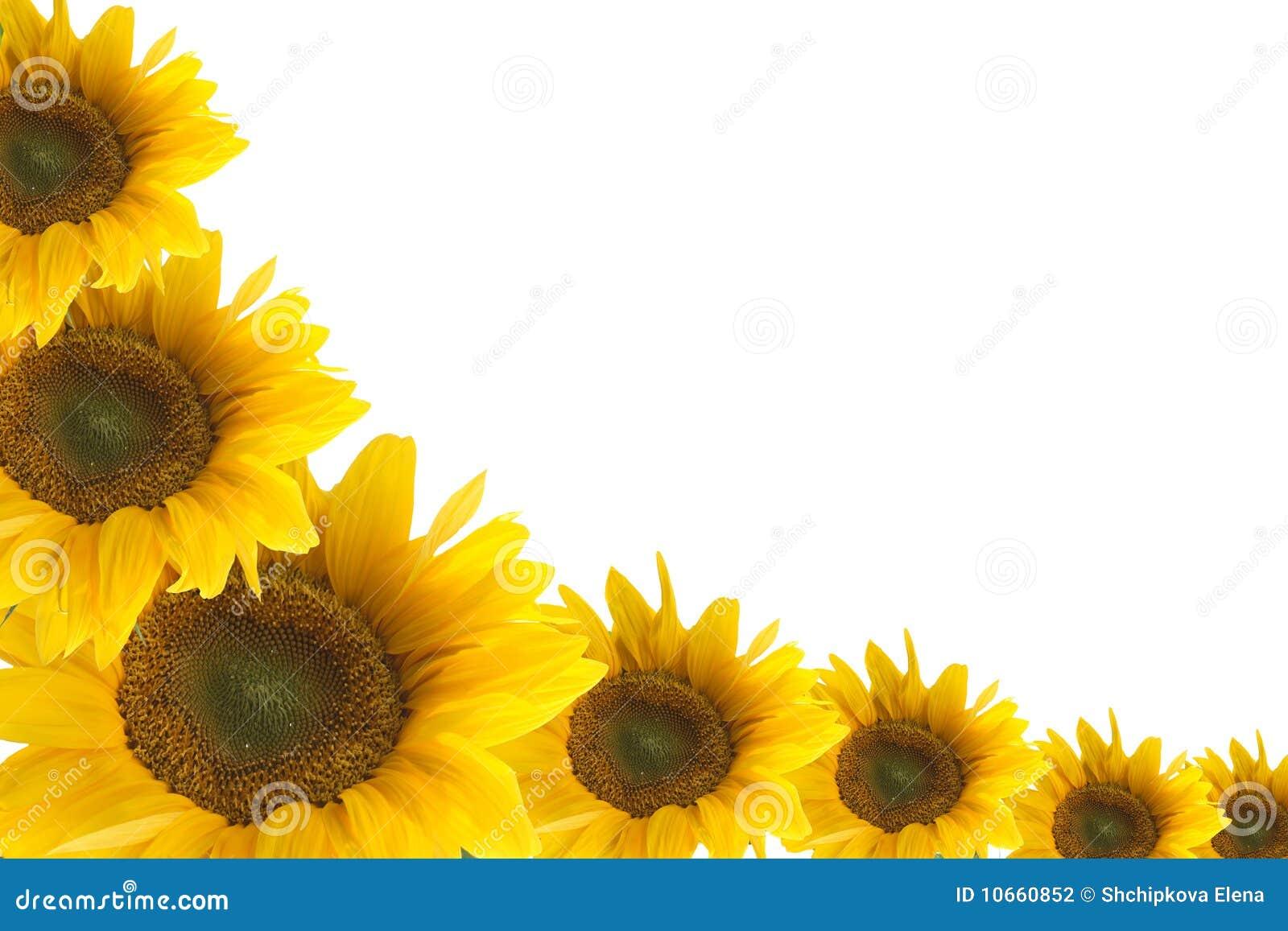 Nett Sonnenblumenbilderrahmen Bilder - Rahmen Ideen ...