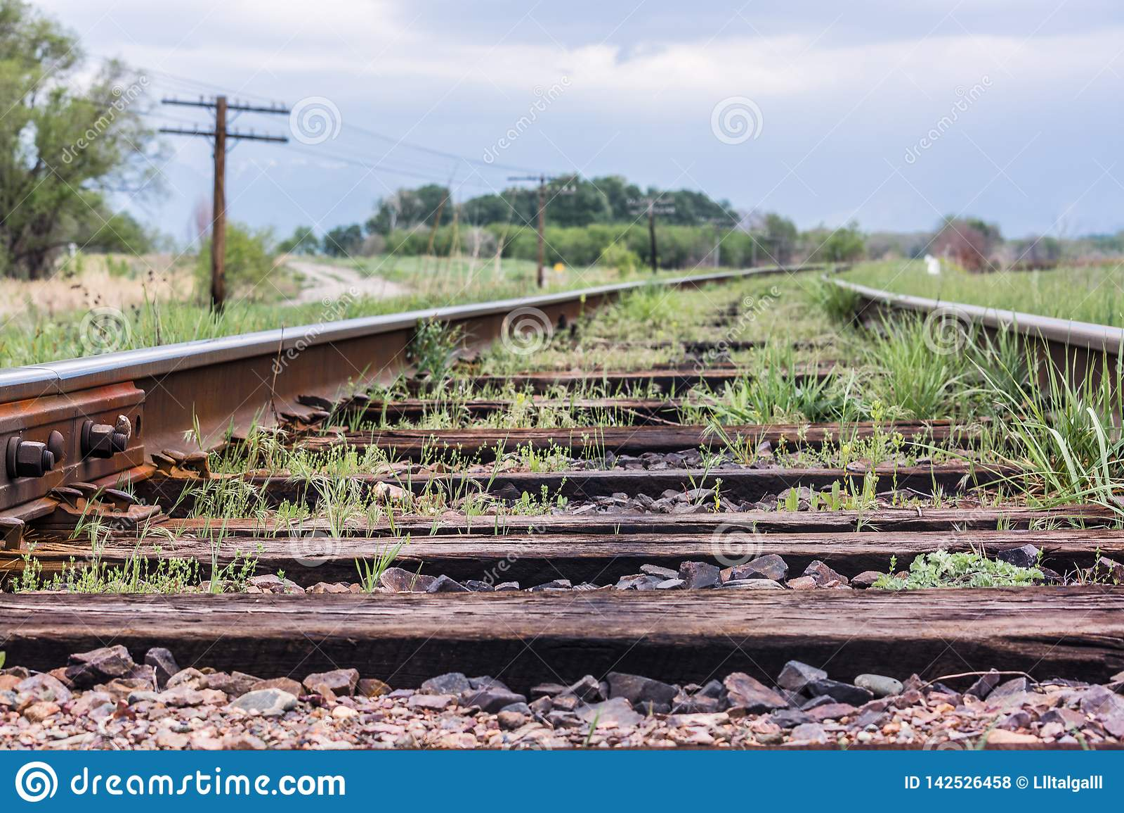 Rail. Nature in Tekeli. Spring.