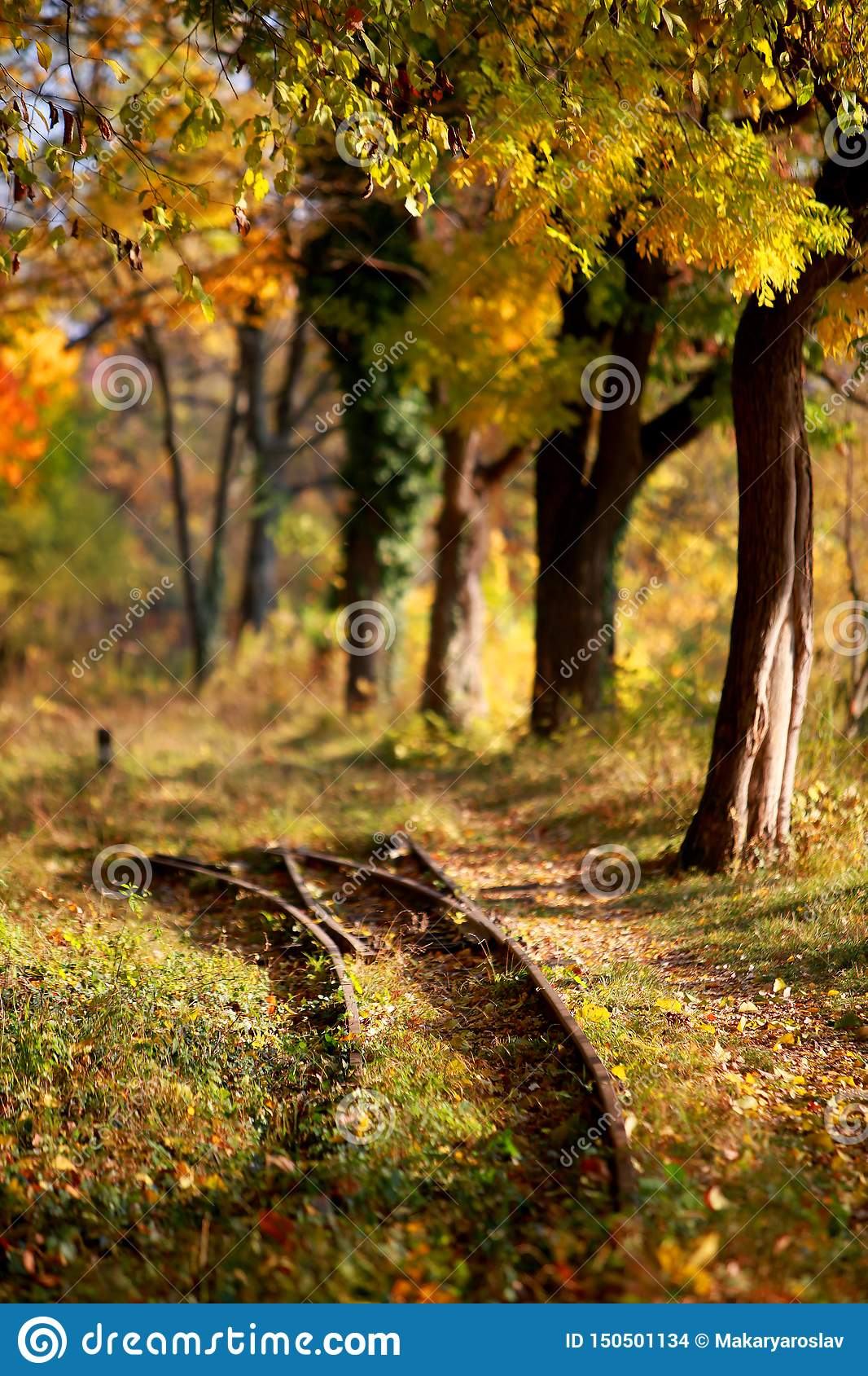 Railway tracks and footpath in the golden forest in autumn