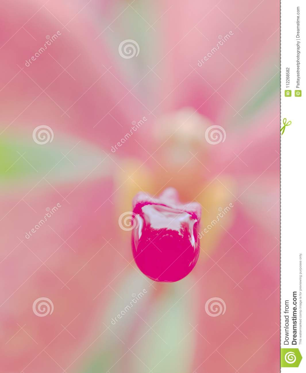Rain drop on lip of pink orchid flower over blurred column, petals and sepals background