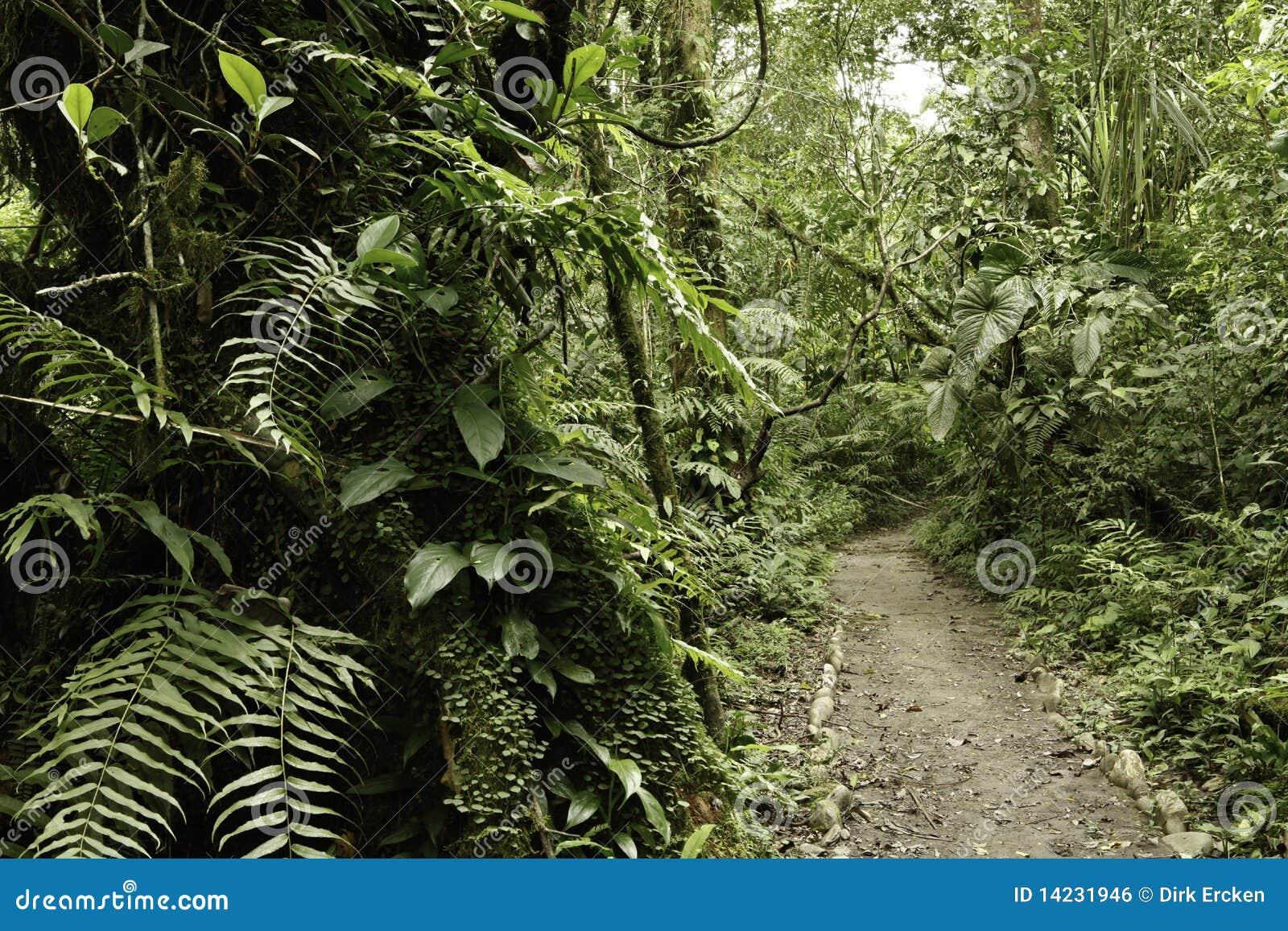 rain forest green tropical amazon jungle stock photo