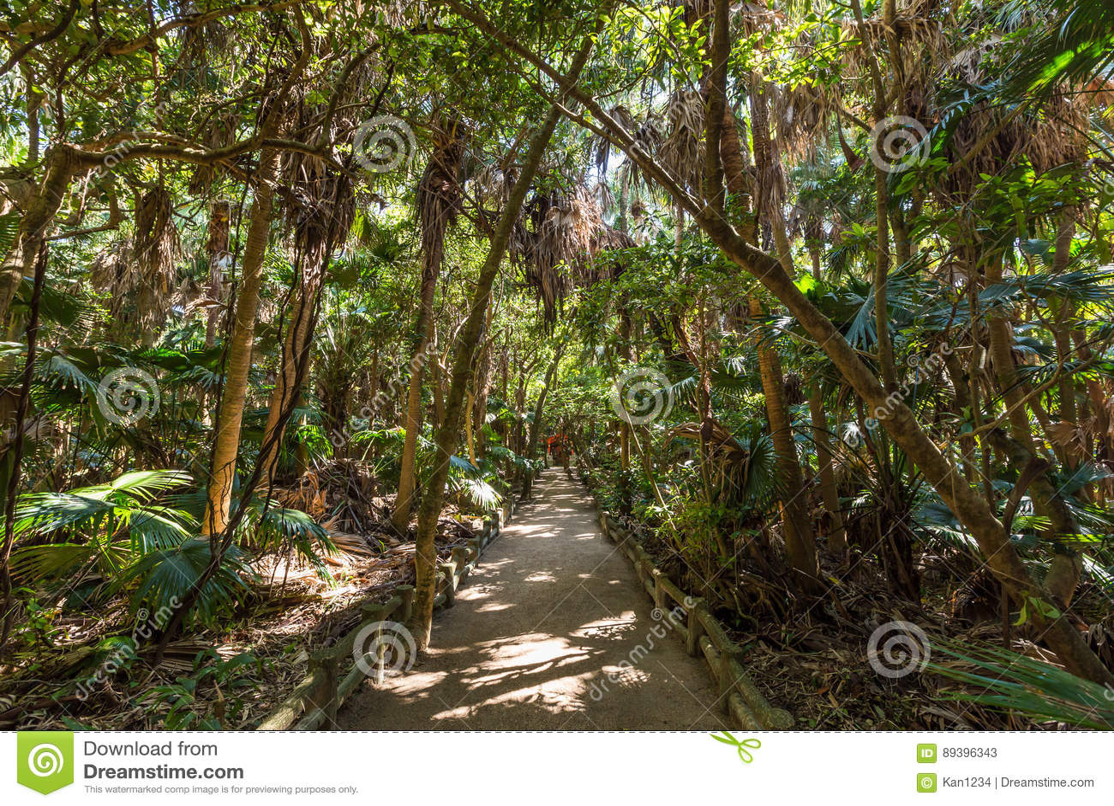 Rain forest park in Aoshima shrine in Miyazaki, Japan