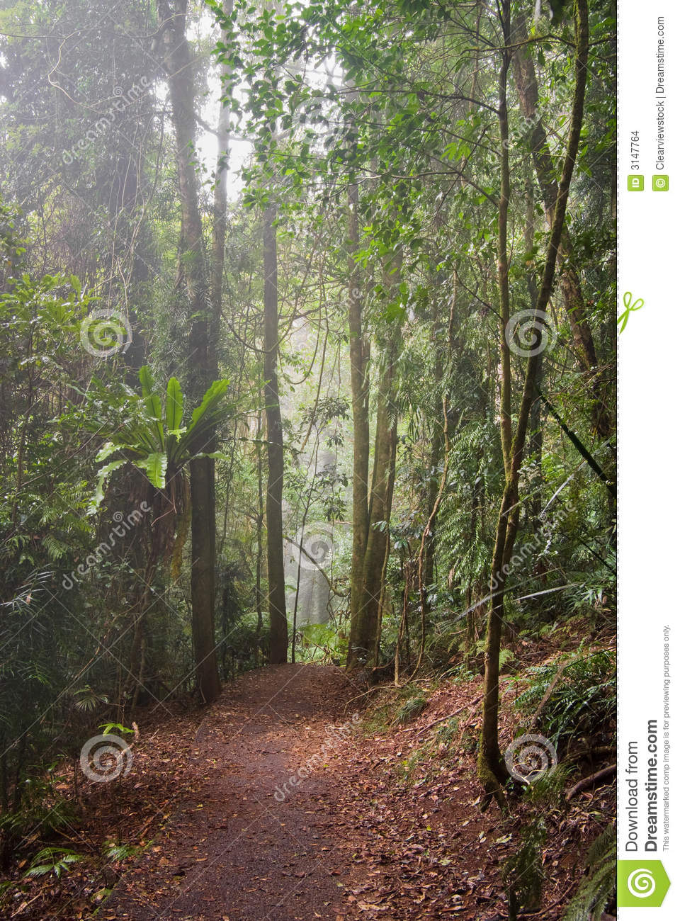 Rain forest path in trees
