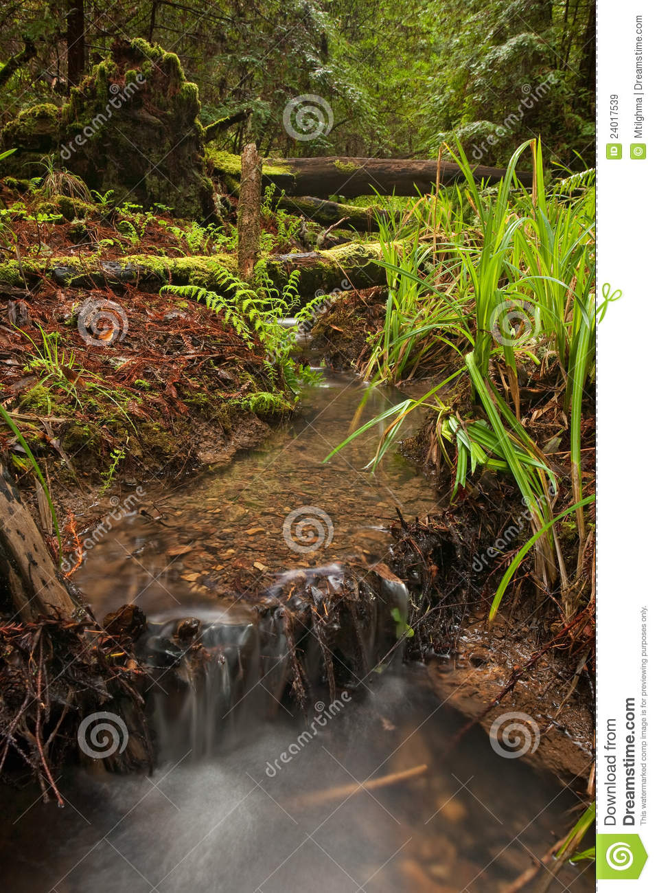 Rain Forest Stream Bed Stock Image. Image Of Nature