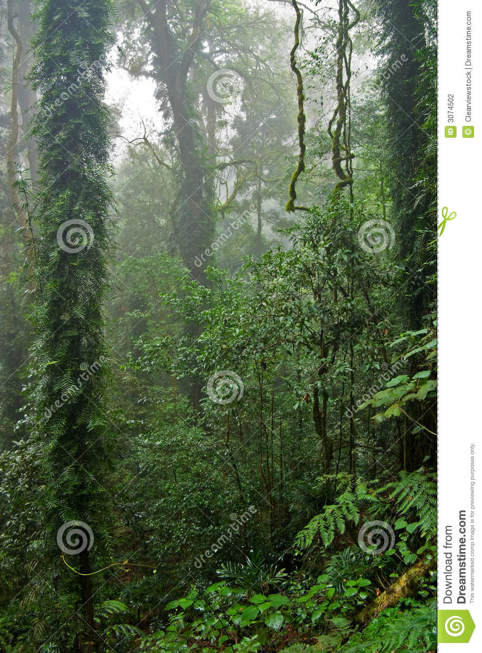 Rain forest trees and plants