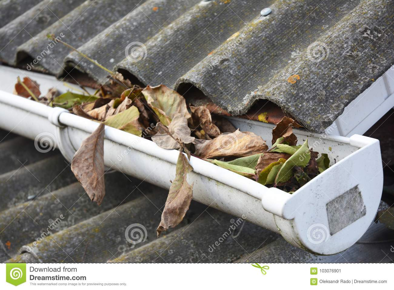 Rain Gutter Cleaning from Leaves in Autumn. Clean Your Gutters Before They Clean Out Your Wallet. Rain Gutter Cleaning.