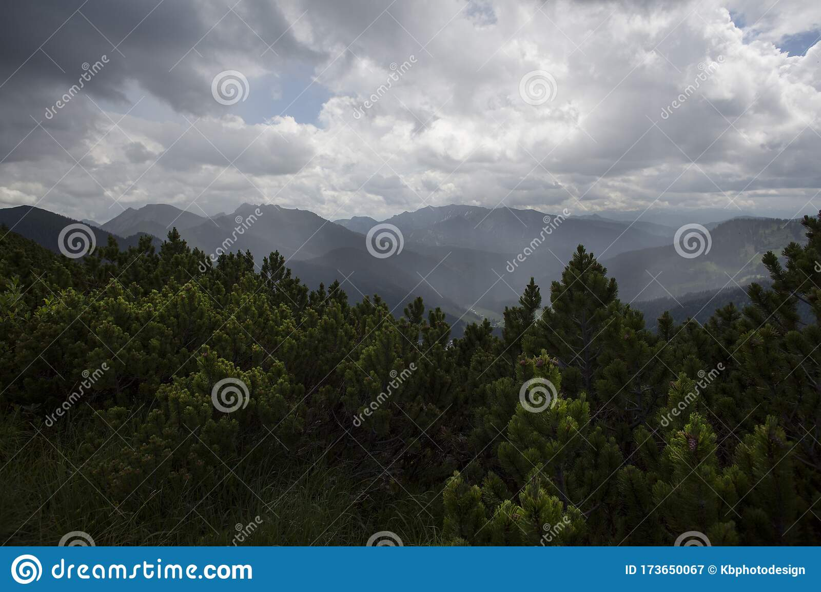 The Rain forest stock photo. Image of tropical, quality
