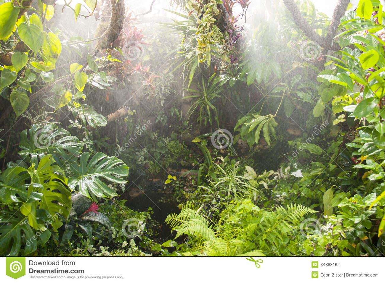 Rain In Tropical Rainforest Stock Photography - Image: 34888162