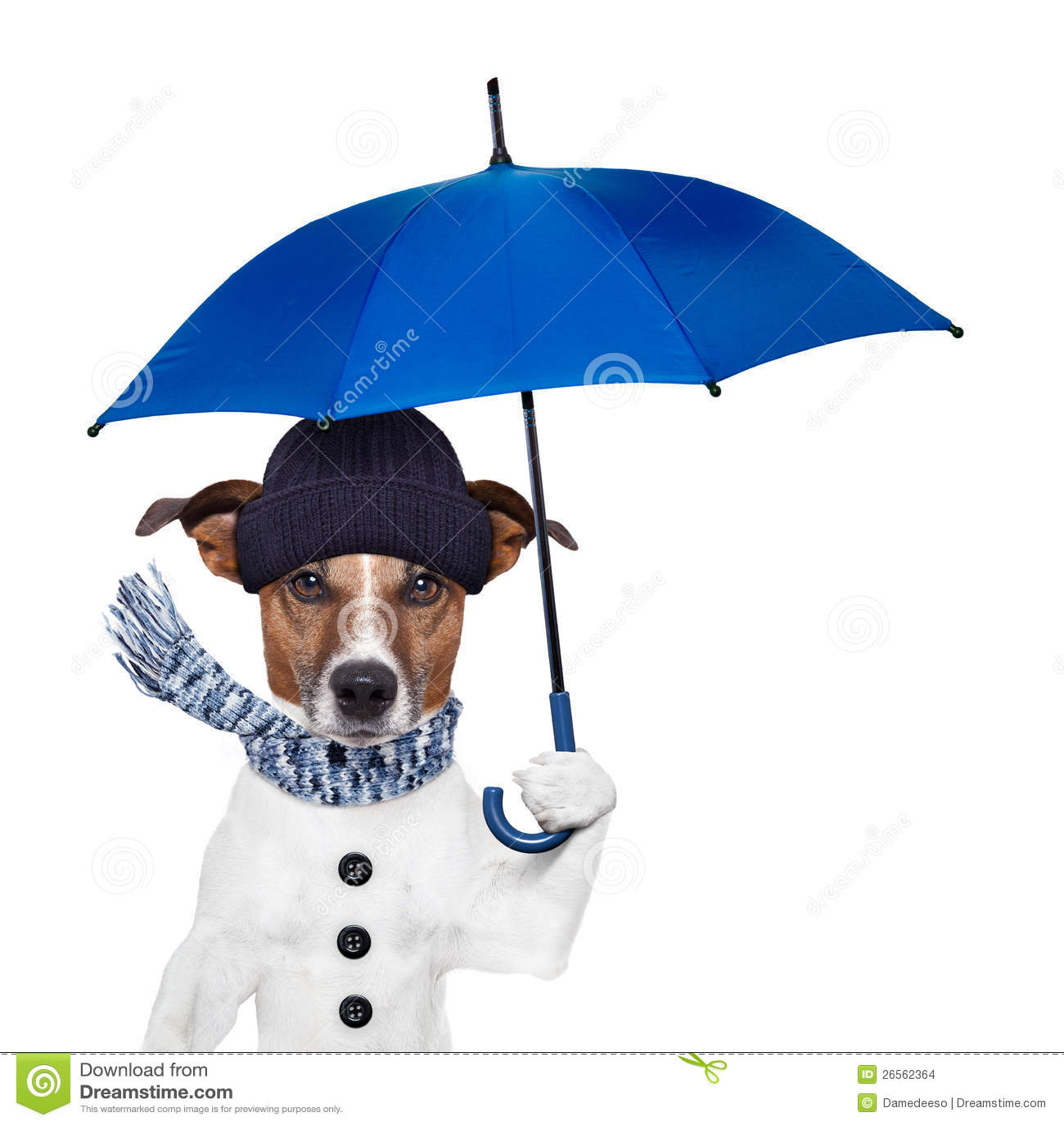rain umbrella dog stock images   image 26562364
