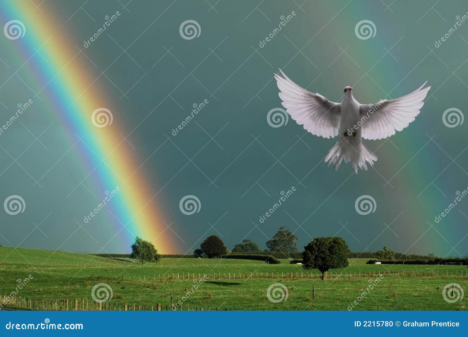 Rainbow and the Dove