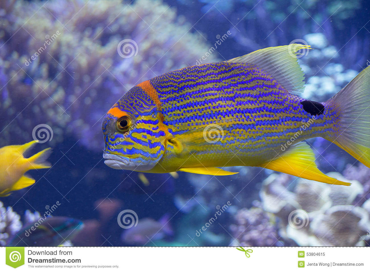 Rainbow fish stock photo image 53804615 for What do fish see