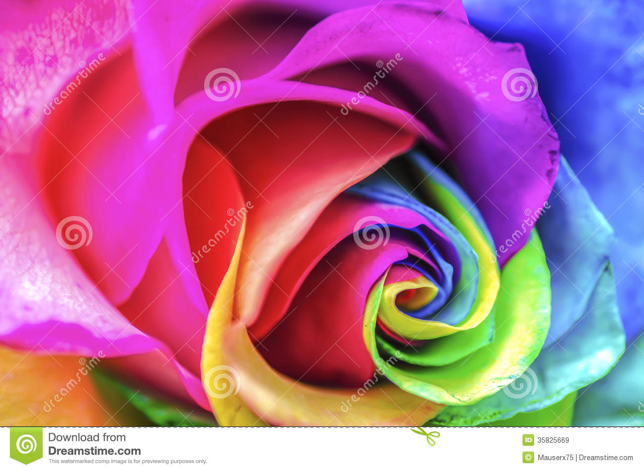 Rainbow Flower Close Up