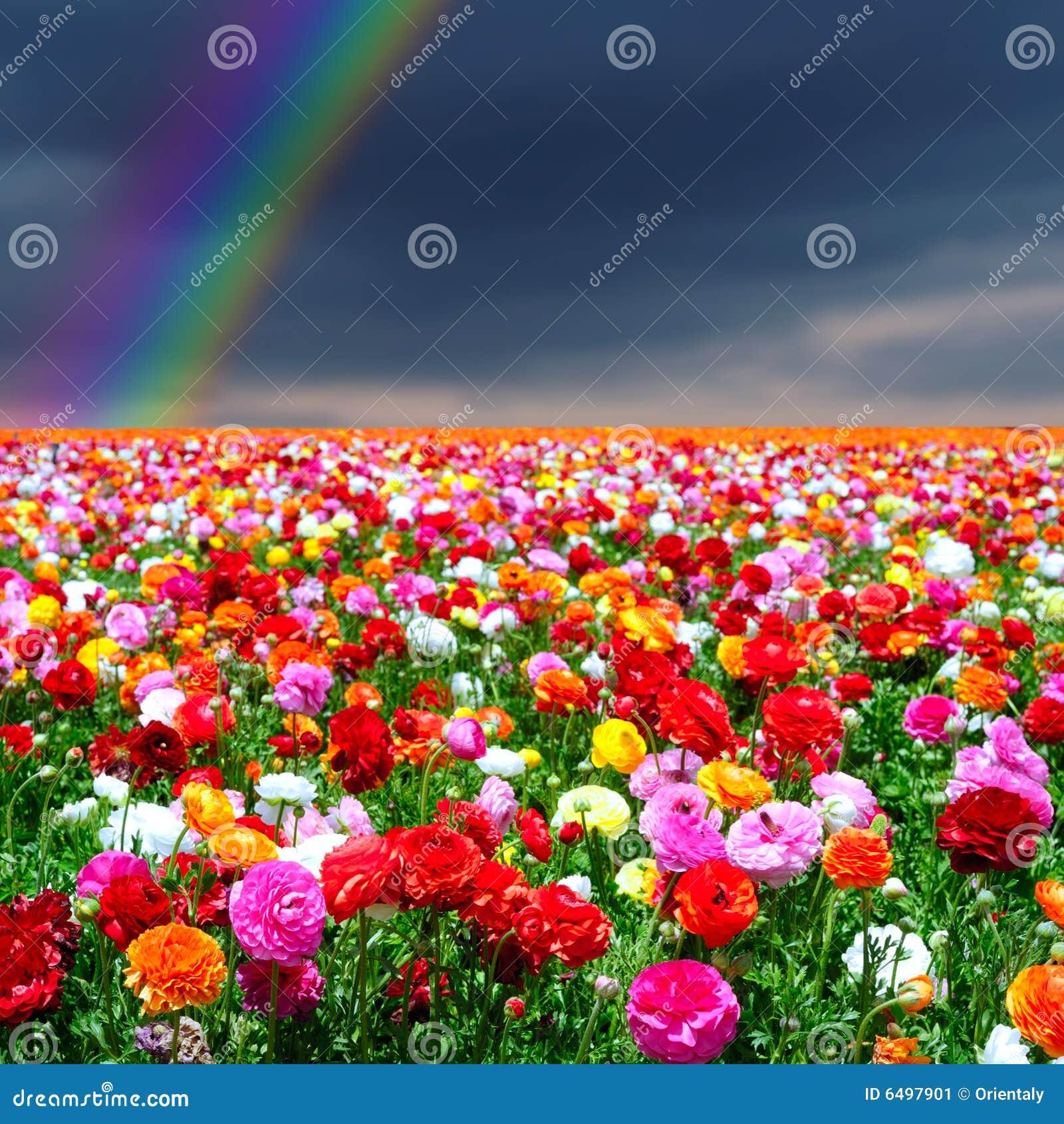 Girl Mejk Color Rainbow Model  Free Images  Pixabay