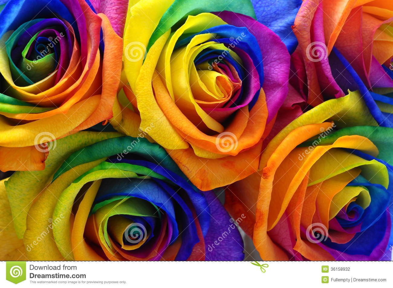 Rainbow rose or happy flower stock photography image for Rainbow petals