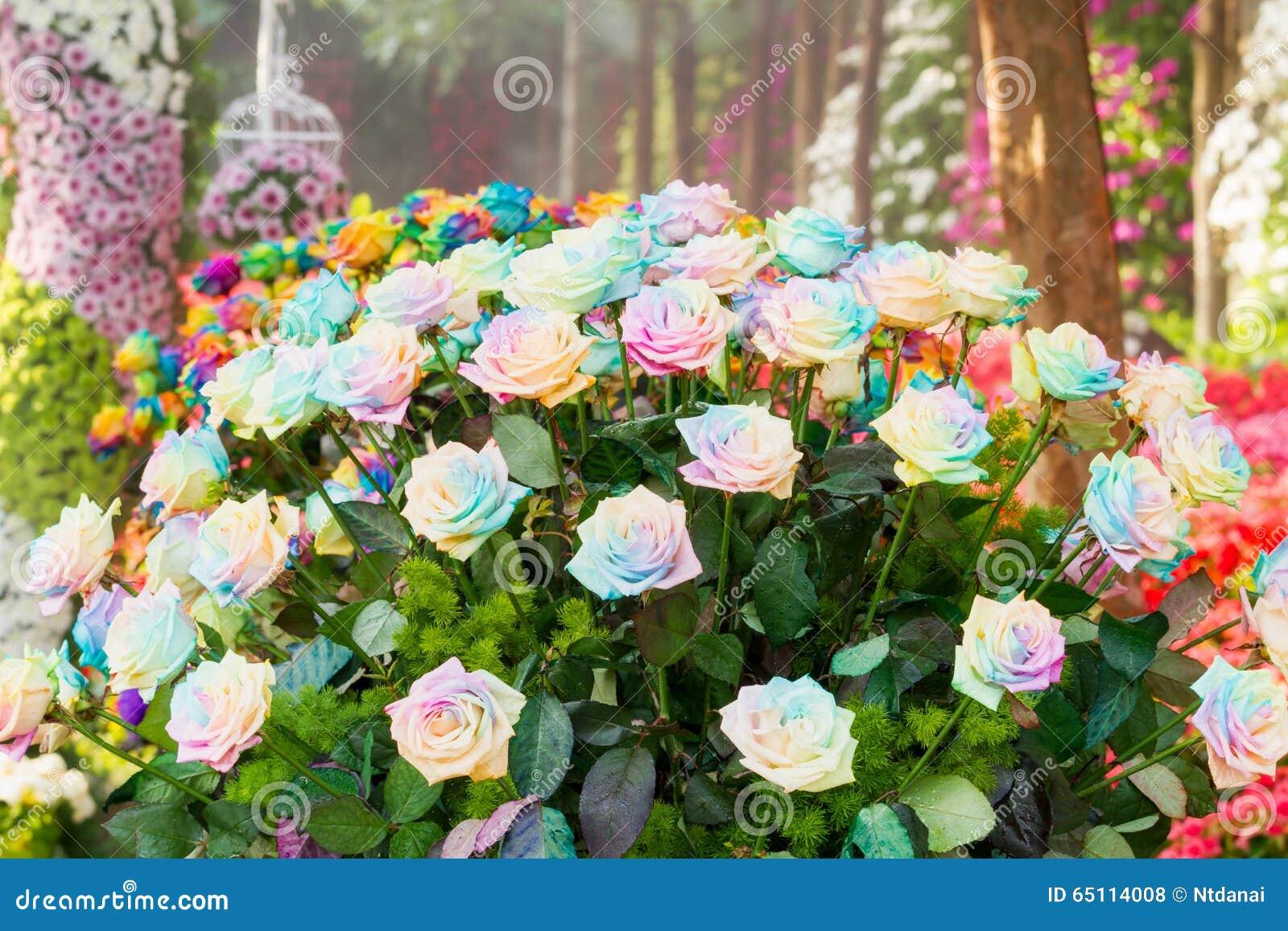 Rainbow Roses Stock Photo - Image: 65114008