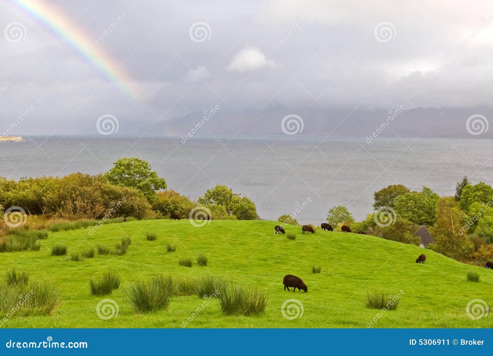 Download Rainbow Sopra Le Pecore Che Pascono Immagine Stock - Immagine di ambiente, bellezza: 5306911