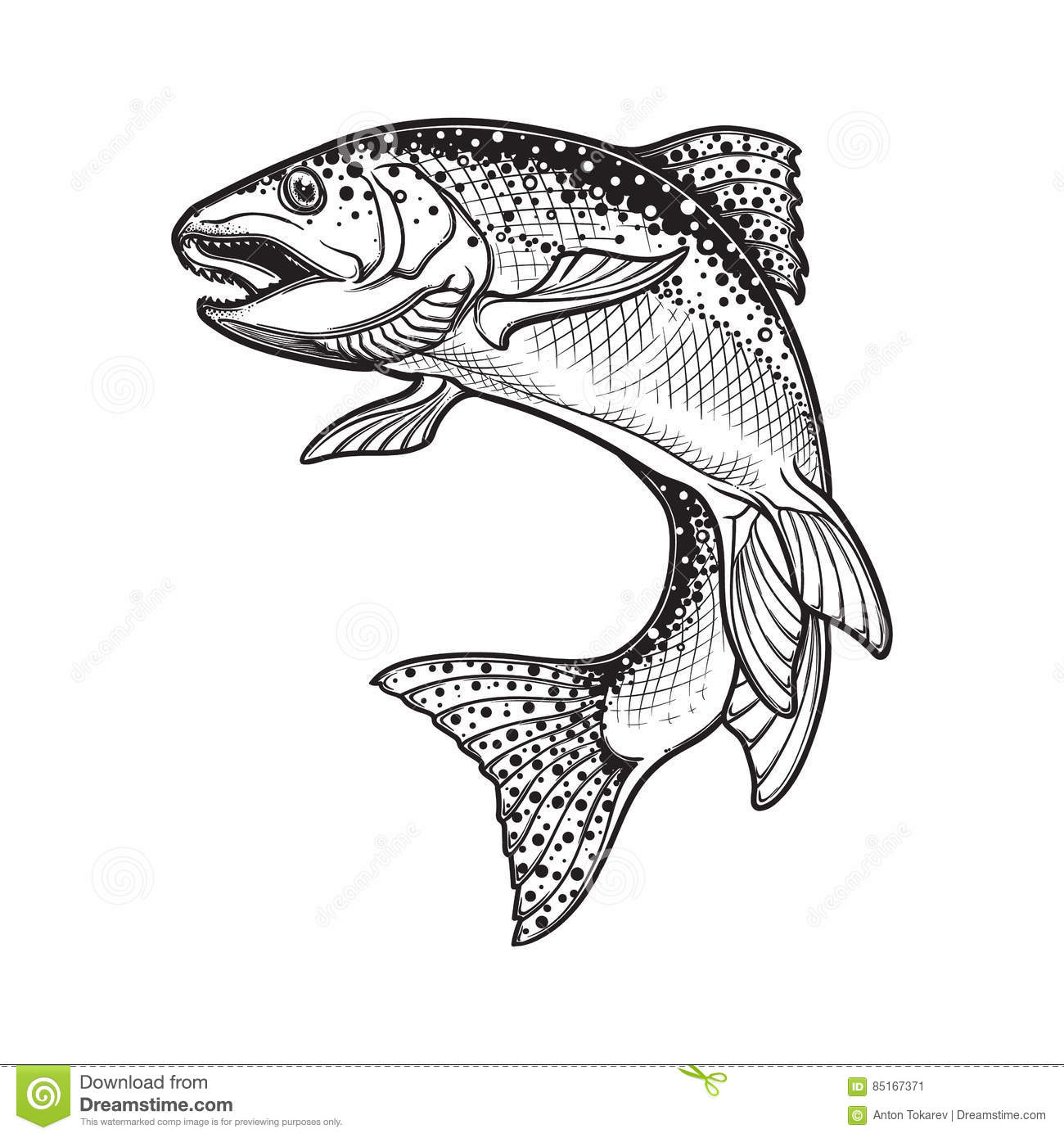 Trout drawing black and white the image for Trota da colorare