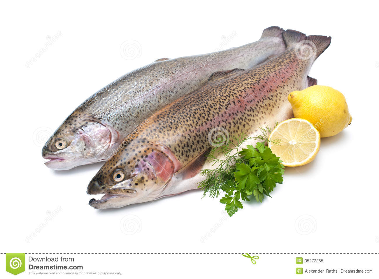 rainbow trout royalty free stock photo image 35272855