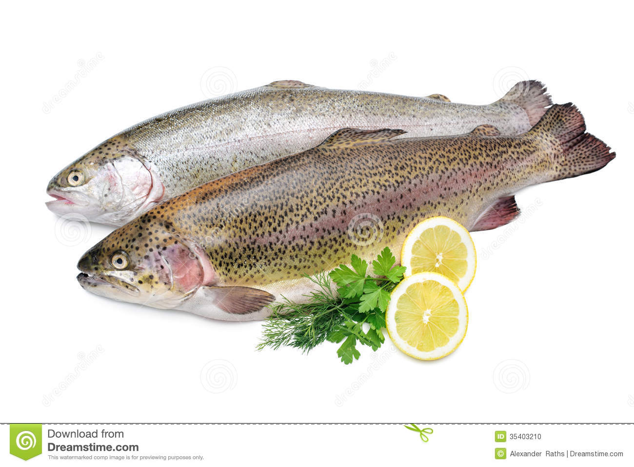 the gallery for gt rainbow trout background