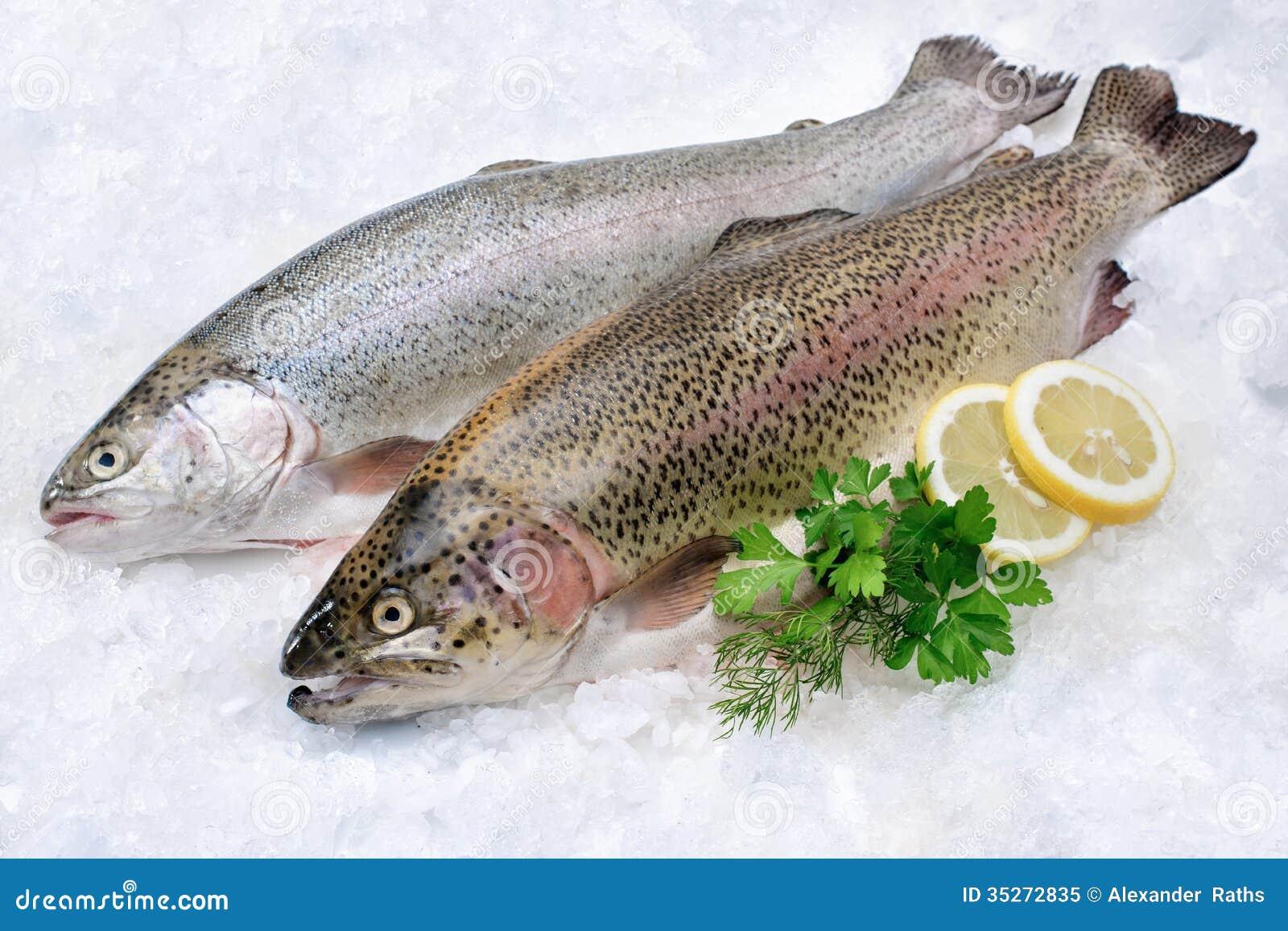 Rainbow trout on ice