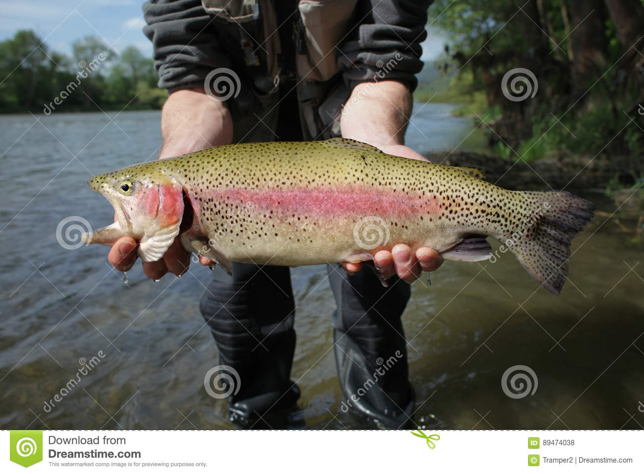 Rainbow trout, redband trout