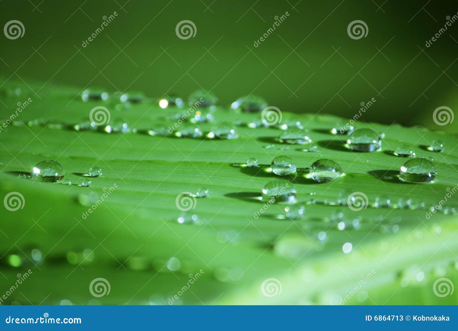 Raindrop листьев банана