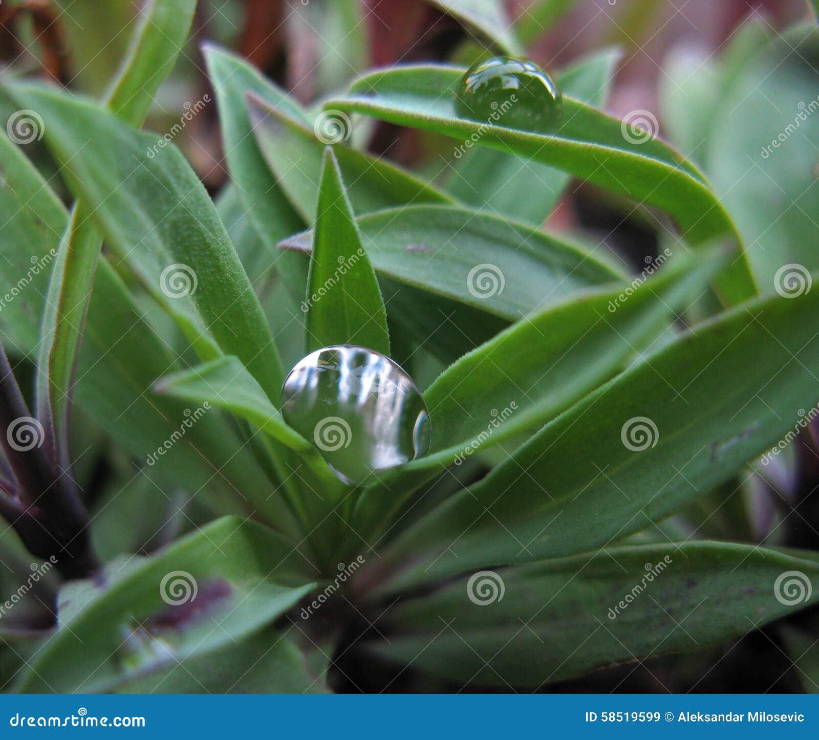 Raindrop on leaves